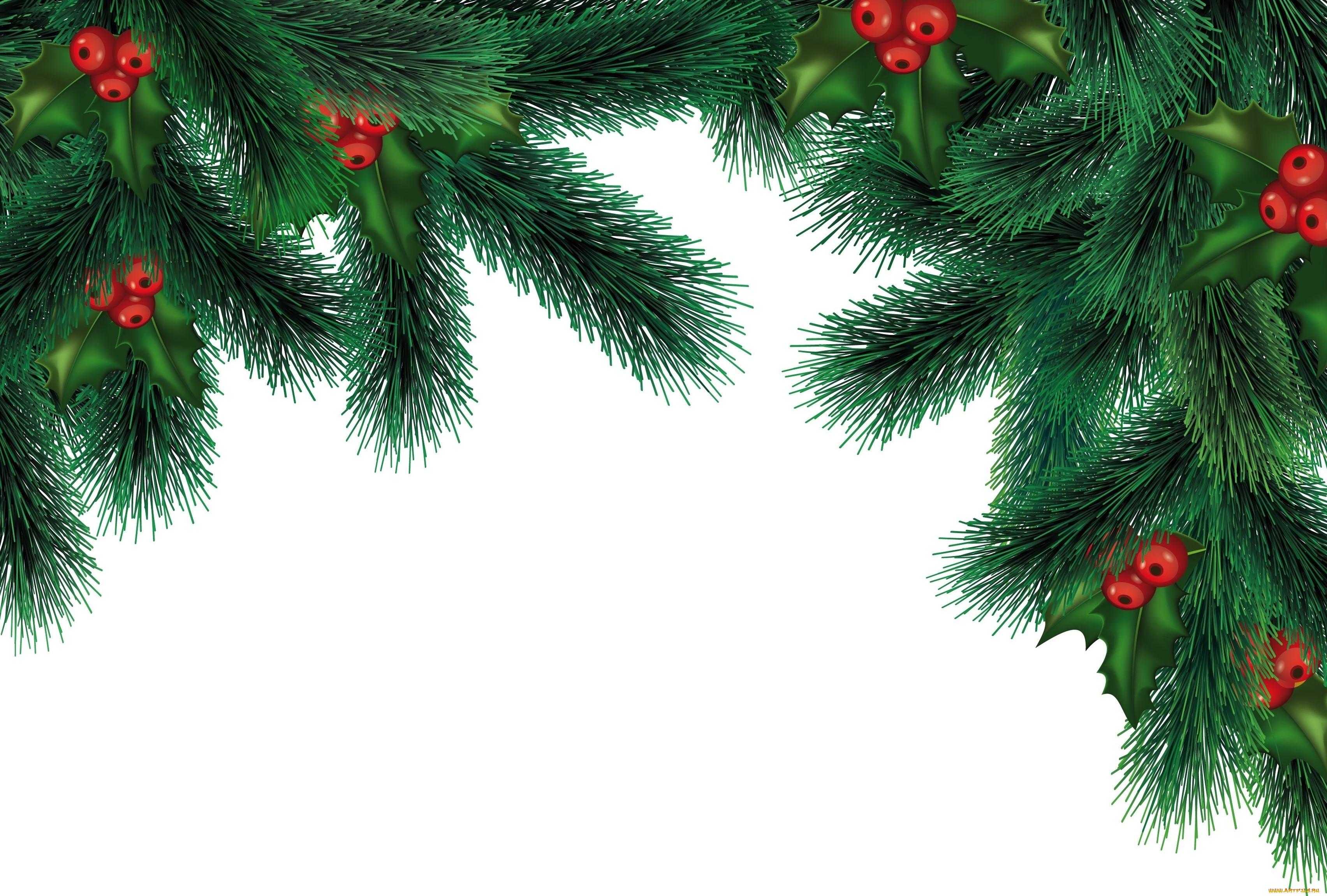 был картинки веточки ели новогодние без фона владхлеб